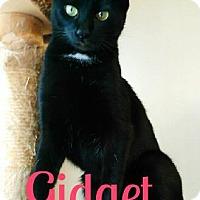 Adopt A Pet :: Gidget - Laplace, LA