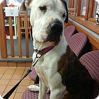Adopt A Pet :: Ruby - Grand Rapids, MI