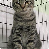 Adopt A Pet :: Elizabeth - Reeds Spring, MO