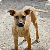 Adopt A Pet :: Goosey - Glastonbury, CT