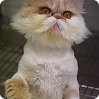 Adopt A Pet :: Prince - DFW Metroplex, TX