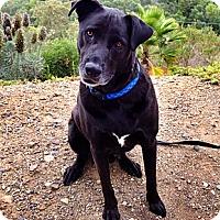 Adopt A Pet :: Rufus - Santa Monica, CA