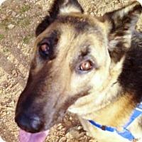 Adopt A Pet :: Bethany beauty - Sacramento, CA