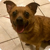 Adopt A Pet :: Allie in CT - Manchester, CT