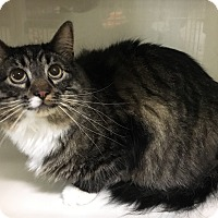 Adopt A Pet :: Samson - Oakdale, CA