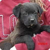 Adopt A Pet :: Doc (8 lb) Video! - Williamsport, MD