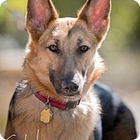 Adopt A Pet :: Sebeka - Modesto, CA