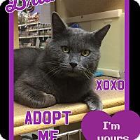 Adopt A Pet :: Bruno - Arlington/Ft Worth, TX