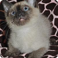 Adopt A Pet :: Sammy - La Canada Flintridge, CA