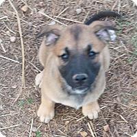 Adopt A Pet :: Felicia (ADOPTED) - Trenton, NJ