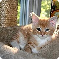 Adopt A Pet :: Ranger(& Flynn) - Arlington, VA