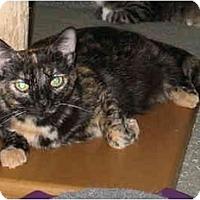 Adopt A Pet :: HalfPint kitten - Cincinnati, OH