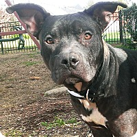 Adopt A Pet :: Omar - Nolensville, TN