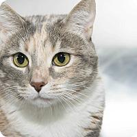 Adopt A Pet :: Wendy - New York, NY