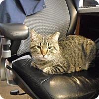 Adopt A Pet :: Billy - Riverside, RI