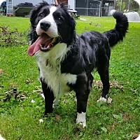 Adopt A Pet :: Kolby (Courtesy Listing from Southfield, MI) - Evansville, IN