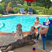 Adopt A Pet :: KALI - Kimberton, PA