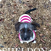 Adopt A Pet :: Sheldon - Fort Valley, GA