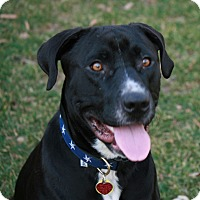 Adopt A Pet :: Bud - Bowie, MD