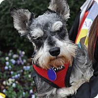 Adopt A Pet :: Brody - Atlanta, GA