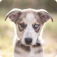 Adopt A Pet :: Bandit - West Hartford, CT
