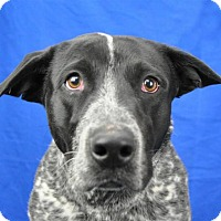 Adopt A Pet :: Mack - Pagosa Springs, CO