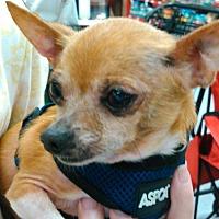 Adopt A Pet :: Harrison - Evans, GA