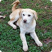 Adopt A Pet :: GRACIE - Courtesy Post - Glastonbury, CT