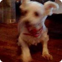 Adopt A Pet :: Tasha - North Benton, OH