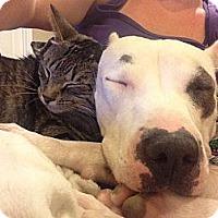 Adopt A Pet :: Essie - Orlando, FL