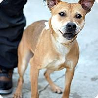 Adopt A Pet :: Kyle - Tinton Falls, NJ