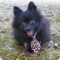 Adopt A Pet :: Katherine - Mocksville, NC