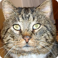 Adopt A Pet :: Mr. Poppers - Southington, CT