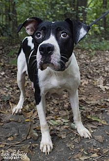 Hound (Unknown Type) Mix Dog for adoption in Charlotte, North Carolina - Nina (Wanted Litter Momma)