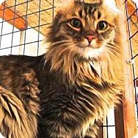 Adopt A Pet :: The Frisco Kid - Davis, CA