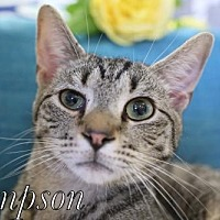 Adopt A Pet :: Sampson Male - knoxville, TN