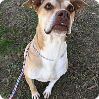 Adopt A Pet :: Junior - Colonial Heights animal shelter, VA