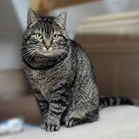 Adopt A Pet :: Tumbleweed - Stafford, VA