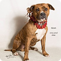 Adopt A Pet :: KENNEL 22 - Corona, CA