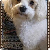 Adopt A Pet :: Molly - East Hartford, CT