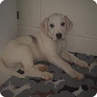 Adopt A Pet :: Garland - Burgaw, NC
