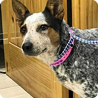 Adopt A Pet :: Jade  *adoption pending* - New York, NY