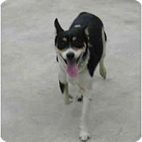 Adopt A Pet :: Ollie - Wahoo, NE