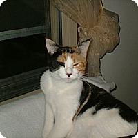 Adopt A Pet :: Squimmley - Milwaukee, WI