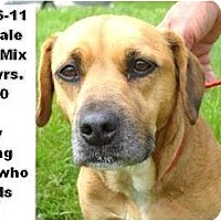 Adopt A Pet :: # 246-11 - ADOPTED! - Zanesville, OH