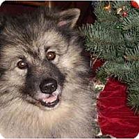 Adopt A Pet :: Myles - Los Altos, CA