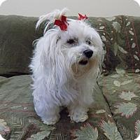 Adopt A Pet :: Strawberry - Tumwater, WA