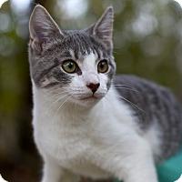 Adopt A Pet :: Freddie - Freeport, FL