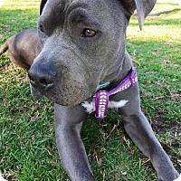 Adopt A Pet :: Valentina - Huntington Beach, CA