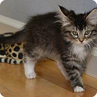 Adopt A Pet :: Makenna Kay - Davis, CA